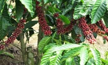 Dalat Secret Coffee Tour